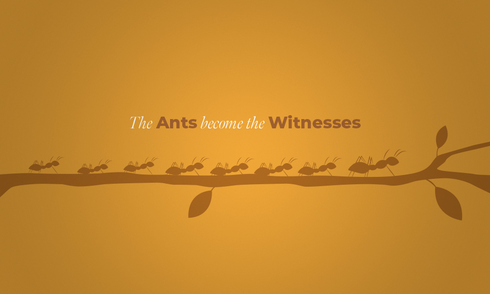 THE ANTS BECOME THE WITNESSES